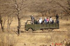 Kanha Safari, Safari in Kanha,